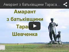 Амарант з батьківщини Тараса Шевченка